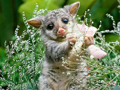 baby_lemur.jpg