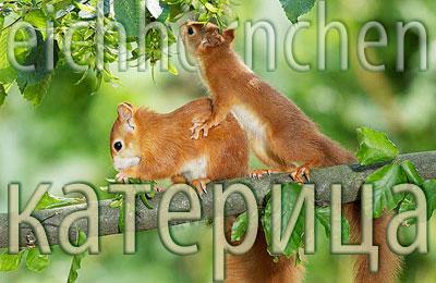 Squirrel. Eichhörnchen. Katritsa